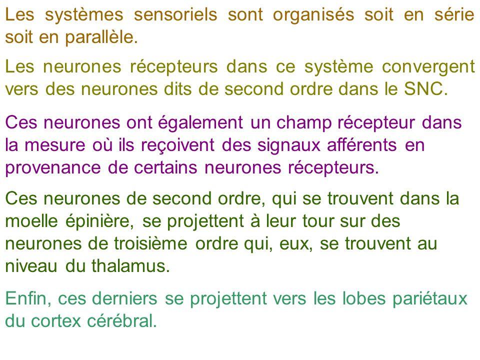 Les systèmes sensoriels sont organisés soit en série soit en parallèle. Les neurones récepteurs dans ce système convergent vers des neurones dits de s
