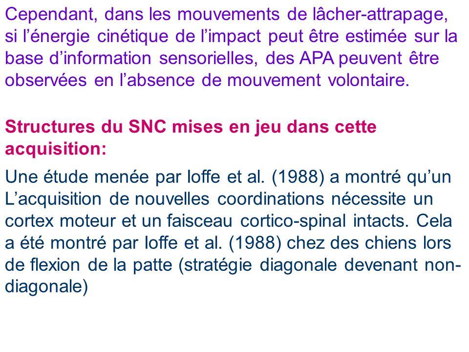 Structures du SNC mises en jeu dans cette acquisition: Une étude menée par Ioffe et al. (1988) a montré quun Lacquisition de nouvelles coordinations n