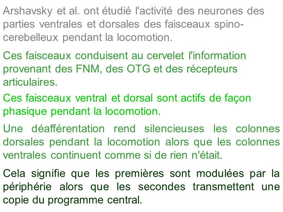 Arshavsky et al. ont étudié l'activité des neurones des parties ventrales et dorsales des faisceaux spino- cerebelleux pendant la locomotion. Ces fais