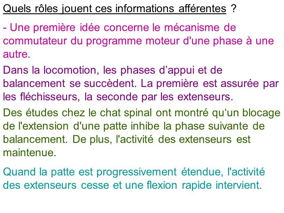 Quels rôles jouent ces informations afférentes ? - Une première idée concerne le mécanisme de commutateur du programme moteur d'une phase à une autre.