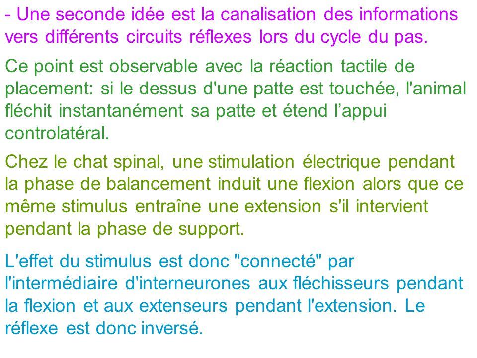 - Une seconde idée est la canalisation des informations vers différents circuits réflexes lors du cycle du pas. Ce point est observable avec la réacti