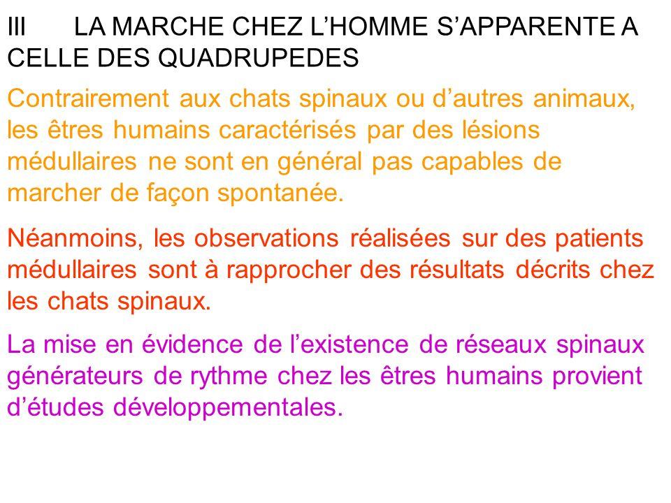 IIILA MARCHE CHEZ LHOMME SAPPARENTE A CELLE DES QUADRUPEDES Contrairement aux chats spinaux ou dautres animaux, les êtres humains caractérisés par des