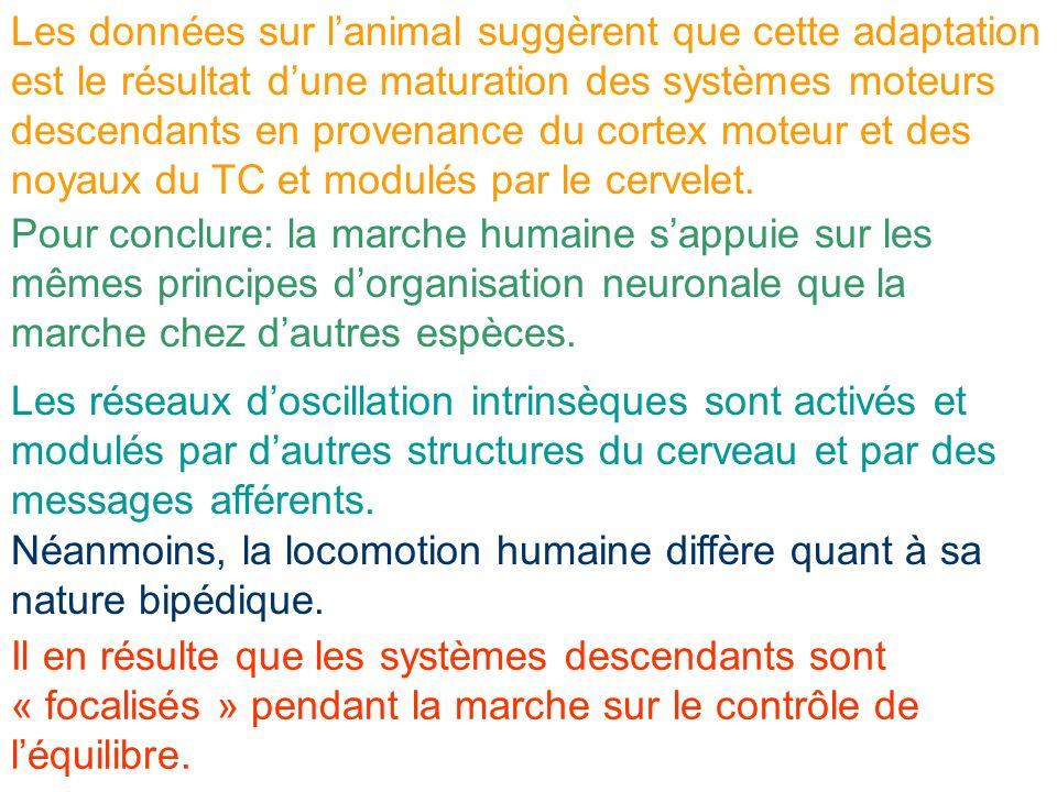 Pour conclure: la marche humaine sappuie sur les mêmes principes dorganisation neuronale que la marche chez dautres espèces. Les données sur lanimal s