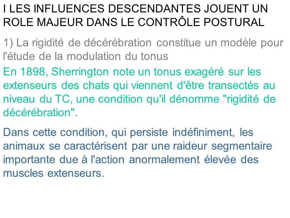 1) La rigidité de décérébration constitue un modèle pour l'étude de la modulation du tonus I LES INFLUENCES DESCENDANTES JOUENT UN ROLE MAJEUR DANS LE