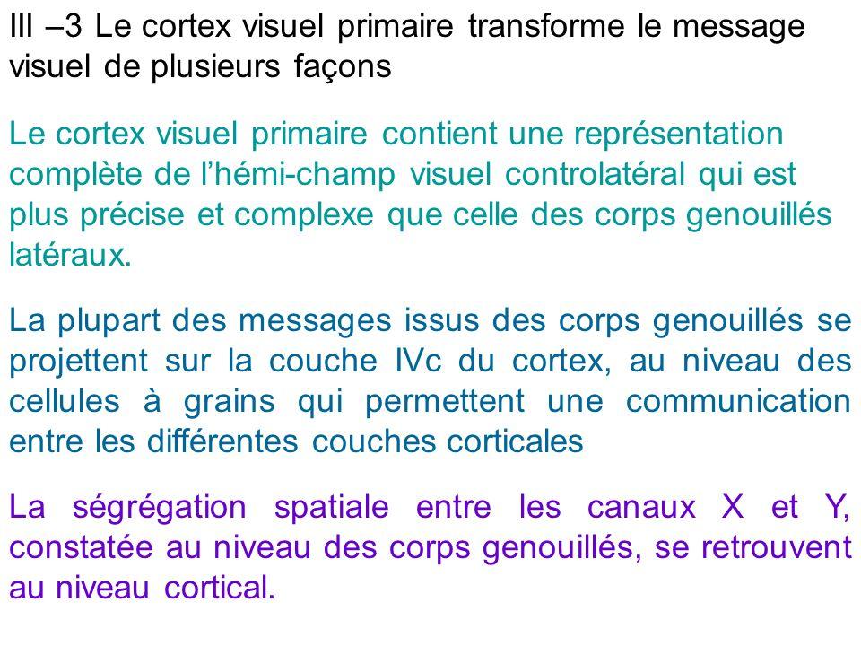 Le cortex visuel primaire contient une représentation complète de lhémi-champ visuel controlatéral qui est plus précise et complexe que celle des corp