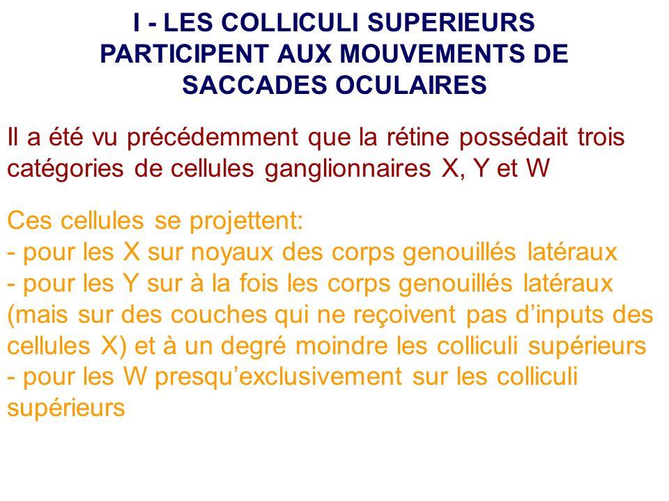 Il a été vu précédemment que la rétine possédait trois catégories de cellules ganglionnaires X, Y et W Ces cellules se projettent: - pour les X sur no