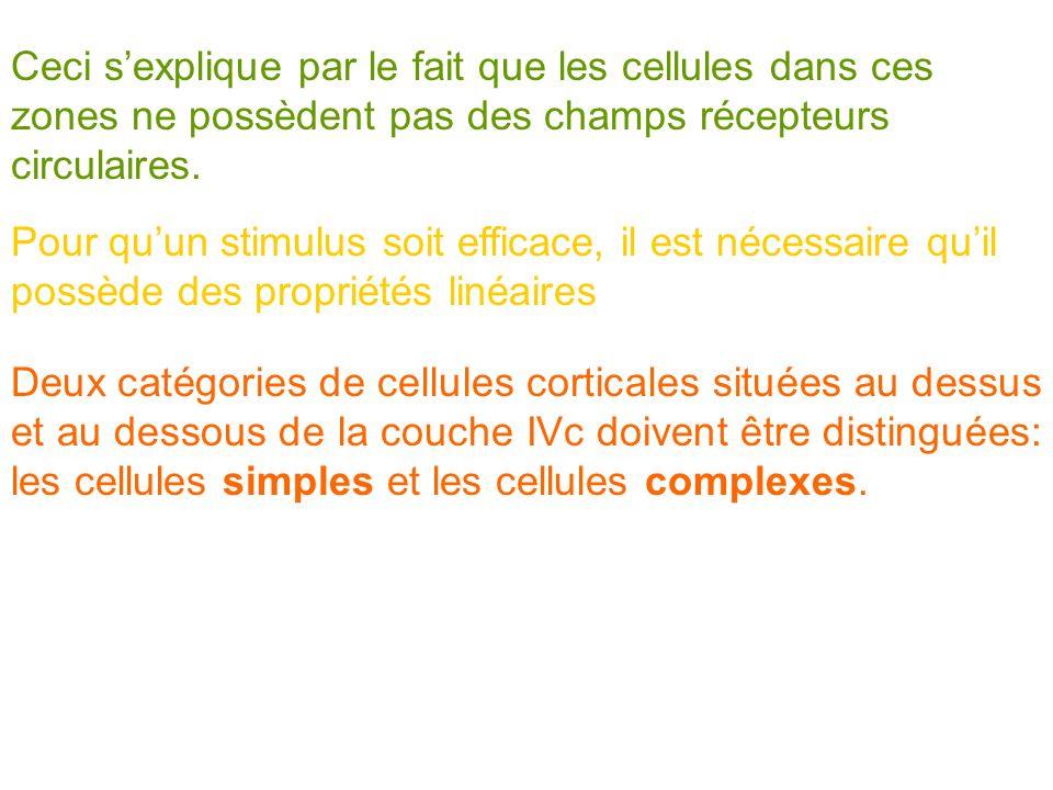 Pour quun stimulus soit efficace, il est nécessaire quil possède des propriétés linéaires Deux catégories de cellules corticales situées au dessus et