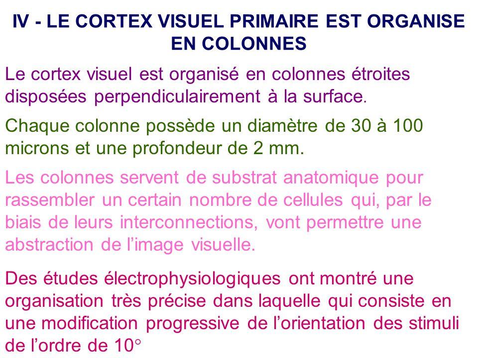 IV - LE CORTEX VISUEL PRIMAIRE EST ORGANISE EN COLONNES Le cortex visuel est organisé en colonnes étroites disposées perpendiculairement à la surface.