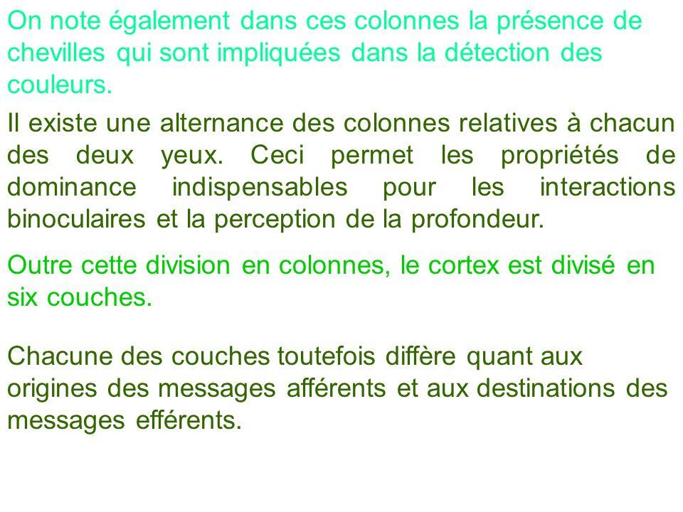 On note également dans ces colonnes la présence de chevilles qui sont impliquées dans la détection des couleurs. Il existe une alternance des colonnes