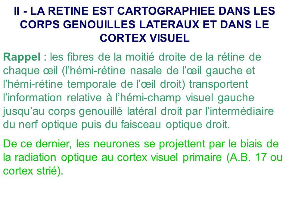 Le cortex visuel primaire contient une représentation complète de lhémi-champ visuel controlatéral qui est plus précise et complexe que celle des corps genouillés latéraux.
