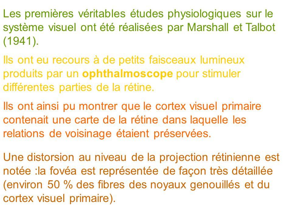 Les premières véritables études physiologiques sur le système visuel ont été réalisées par Marshall et Talbot (1941). Ils ont eu recours à de petits f