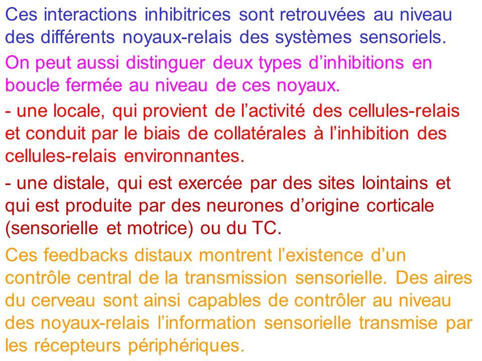 Ces interactions inhibitrices sont retrouvées au niveau des différents noyaux-relais des systèmes sensoriels. On peut aussi distinguer deux types dinh