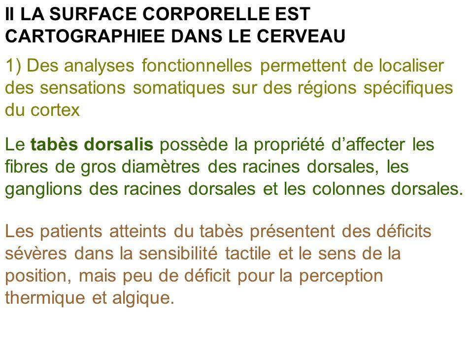 II LA SURFACE CORPORELLE EST CARTOGRAPHIEE DANS LE CERVEAU 1) Des analyses fonctionnelles permettent de localiser des sensations somatiques sur des ré