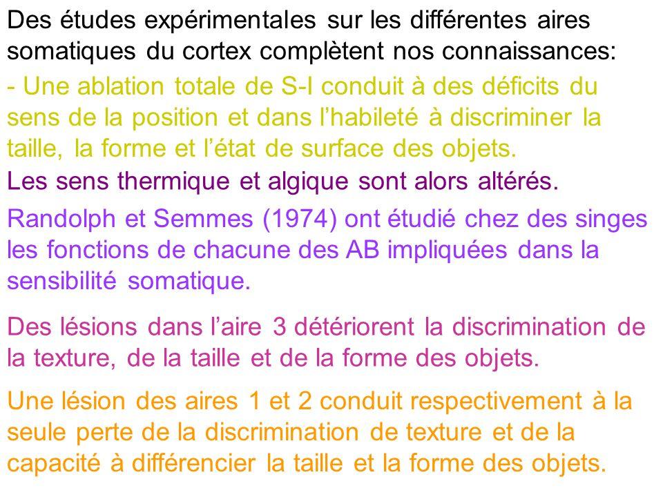 Des études expérimentales sur les différentes aires somatiques du cortex complètent nos connaissances: - Une ablation totale de S-I conduit à des défi