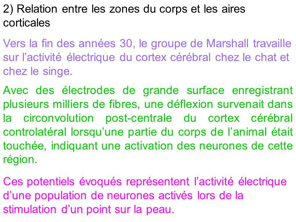 2) Relation entre les zones du corps et les aires corticales Vers la fin des années 30, le groupe de Marshall travaille sur lactivité électrique du co