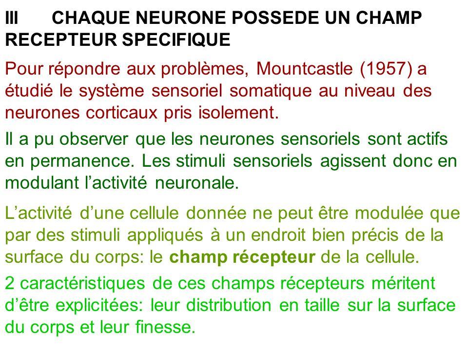 IIICHAQUE NEURONE POSSEDE UN CHAMP RECEPTEUR SPECIFIQUE Pour répondre aux problèmes, Mountcastle (1957) a étudié le système sensoriel somatique au niv