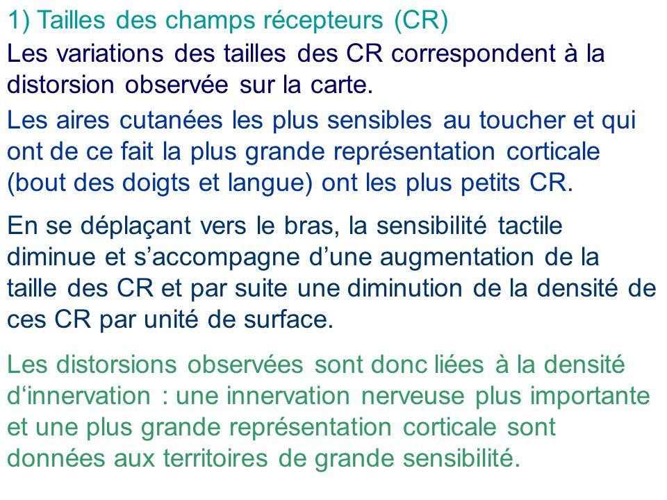 1) Tailles des champs récepteurs (CR) Les variations des tailles des CR correspondent à la distorsion observée sur la carte. Les aires cutanées les pl