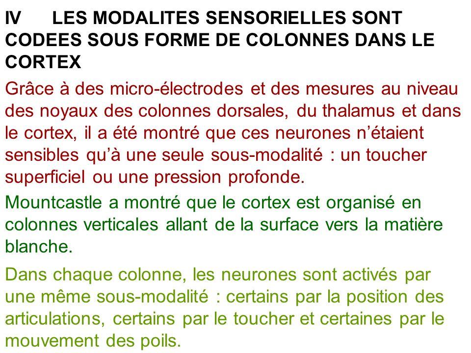 IVLES MODALITES SENSORIELLES SONT CODEES SOUS FORME DE COLONNES DANS LE CORTEX Grâce à des micro-électrodes et des mesures au niveau des noyaux des co