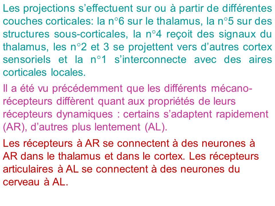 Les projections seffectuent sur ou à partir de différentes couches corticales: la n°6 sur le thalamus, la n°5 sur des structures sous-corticales, la n