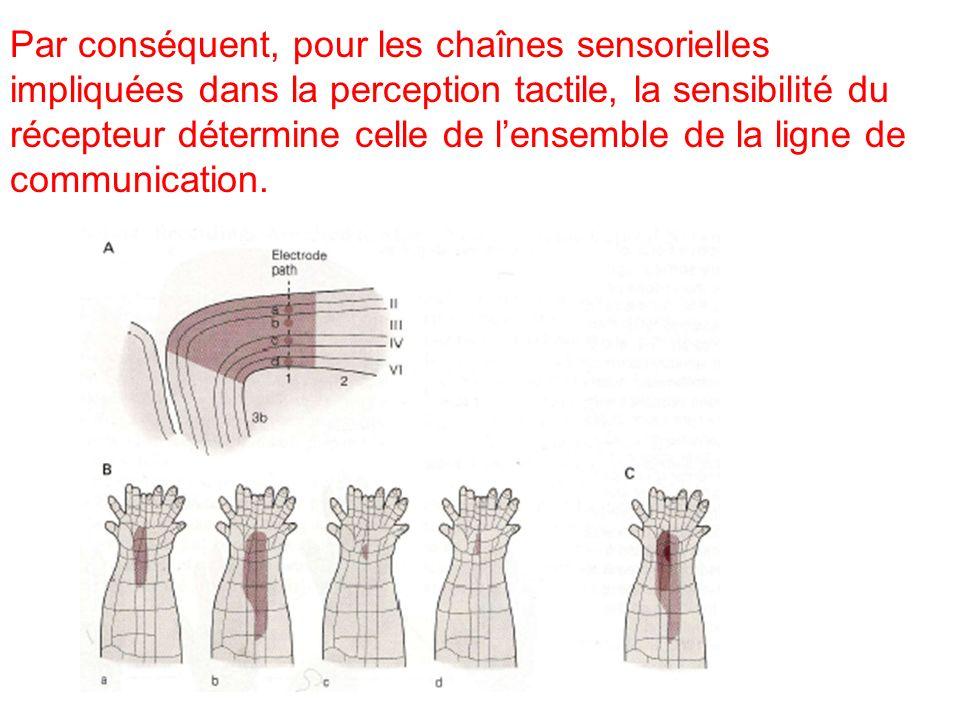 Par conséquent, pour les chaînes sensorielles impliquées dans la perception tactile, la sensibilité du récepteur détermine celle de lensemble de la li