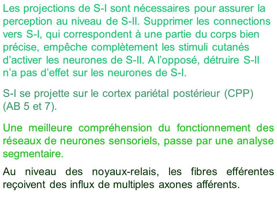 Les projections de S-I sont nécessaires pour assurer la perception au niveau de S-II. Supprimer les connections vers S-I, qui correspondent à une part