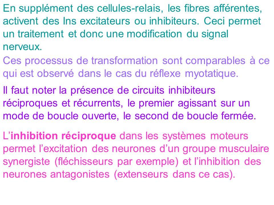 En supplément des cellules-relais, les fibres afférentes, activent des Ins excitateurs ou inhibiteurs. Ceci permet un traitement et donc une modificat