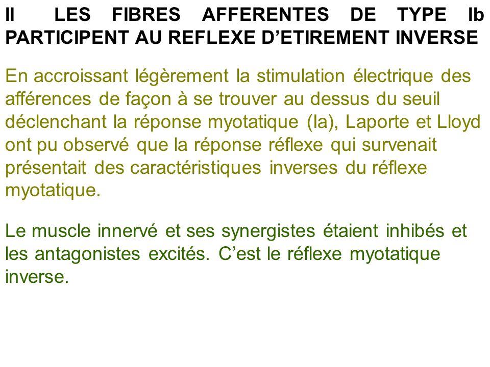 IILES FIBRES AFFERENTES DE TYPE Ib PARTICIPENT AU REFLEXE DETIREMENT INVERSE En accroissant légèrement la stimulation électrique des afférences de faç