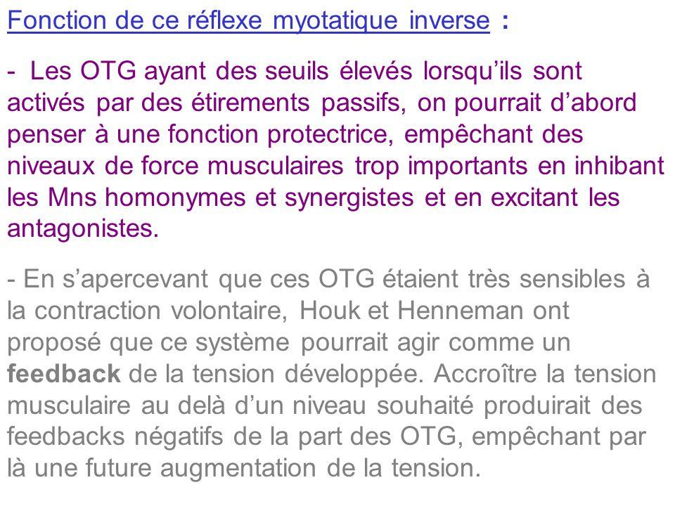 Fonction de ce réflexe myotatique inverse : - Les OTG ayant des seuils élevés lorsquils sont activés par des étirements passifs, on pourrait dabord pe