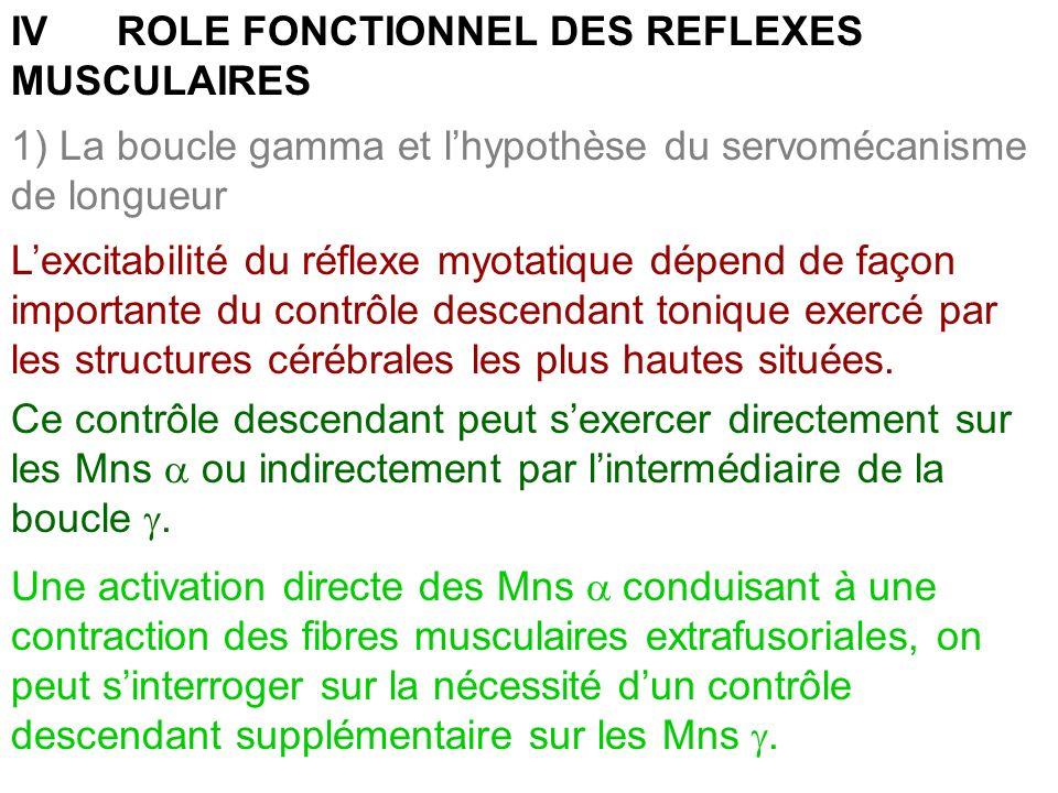 1) La boucle gamma et lhypothèse du servomécanisme de longueur IV ROLE FONCTIONNEL DES REFLEXES MUSCULAIRES Lexcitabilité du réflexe myotatique dépend