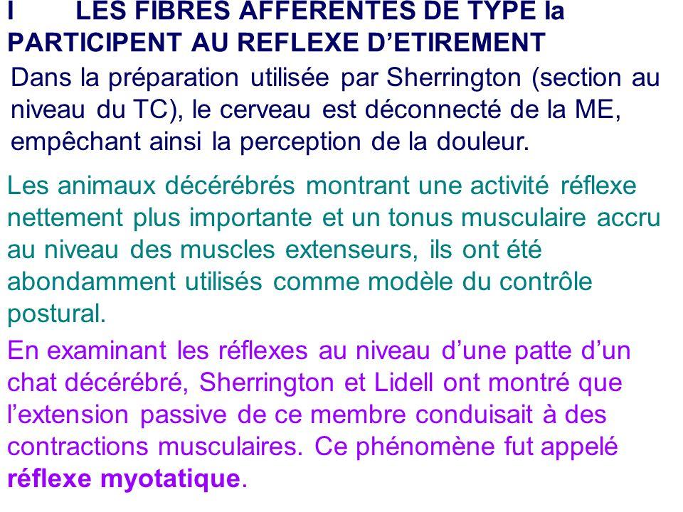 Dans la préparation utilisée par Sherrington (section au niveau du TC), le cerveau est déconnecté de la ME, empêchant ainsi la perception de la douleu