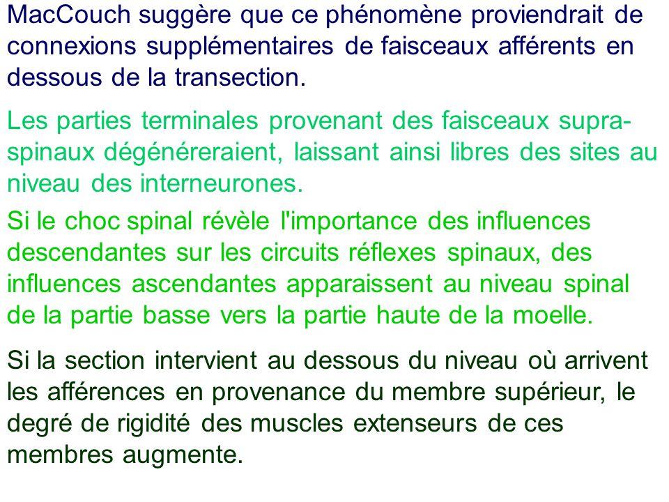 Les parties terminales provenant des faisceaux supra- spinaux dégénéreraient, laissant ainsi libres des sites au niveau des interneurones. Si le choc
