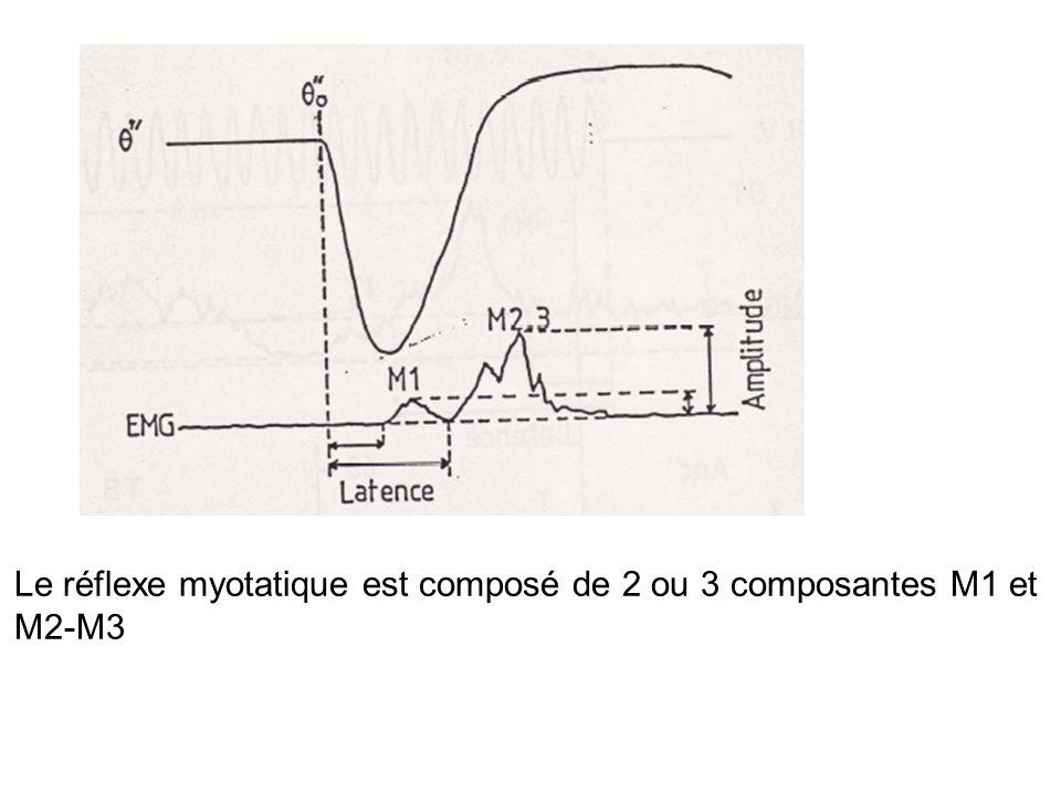Dans la mesure où le réflexe détirement met à contribution aussi bien les afférences de type II que les Ia, ce résultat suggère que les premières participent également au réflexe détirement.