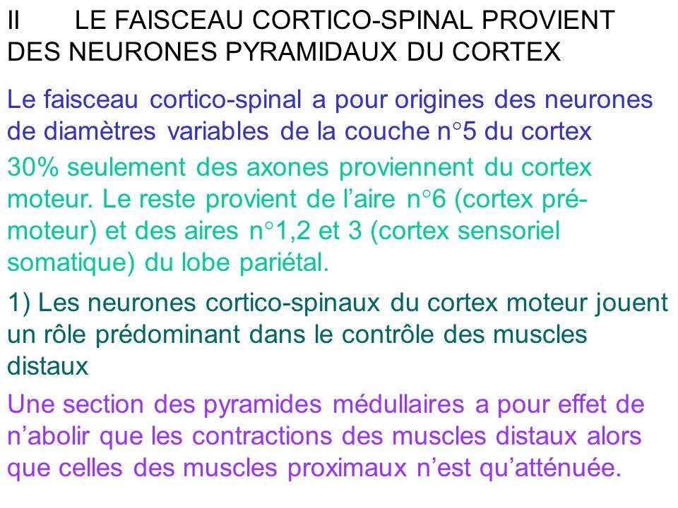 IILE FAISCEAU CORTICO-SPINAL PROVIENT DES NEURONES PYRAMIDAUX DU CORTEX Le faisceau cortico-spinal a pour origines des neurones de diamètres variables