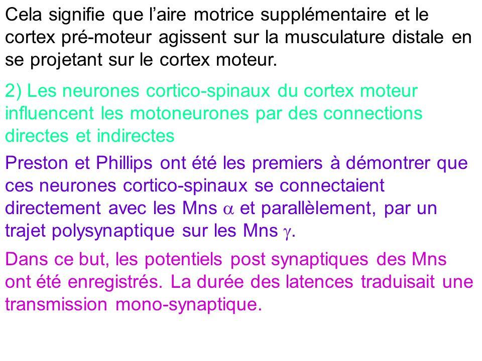Cela signifie que laire motrice supplémentaire et le cortex pré-moteur agissent sur la musculature distale en se projetant sur le cortex moteur. 2) Le