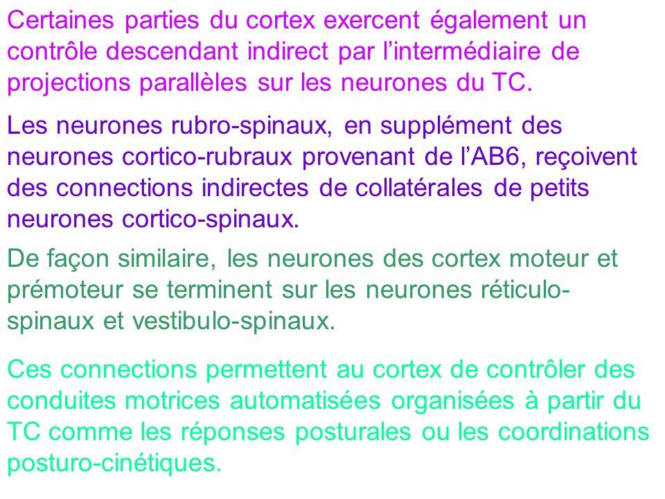 Certaines parties du cortex exercent également un contrôle descendant indirect par lintermédiaire de projections parallèles sur les neurones du TC. Le