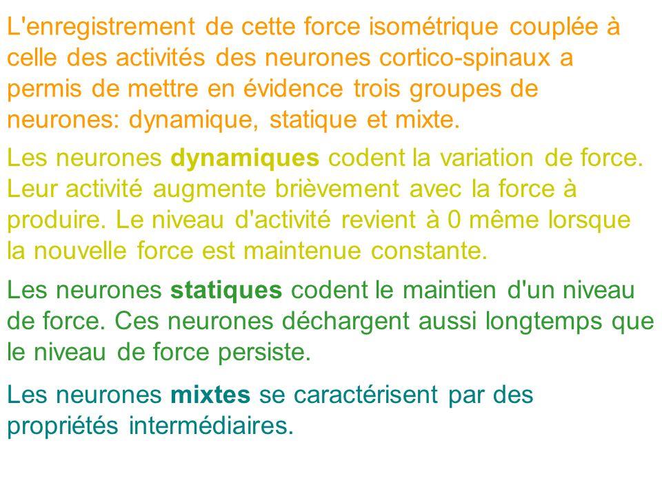 L'enregistrement de cette force isométrique couplée à celle des activités des neurones cortico-spinaux a permis de mettre en évidence trois groupes de