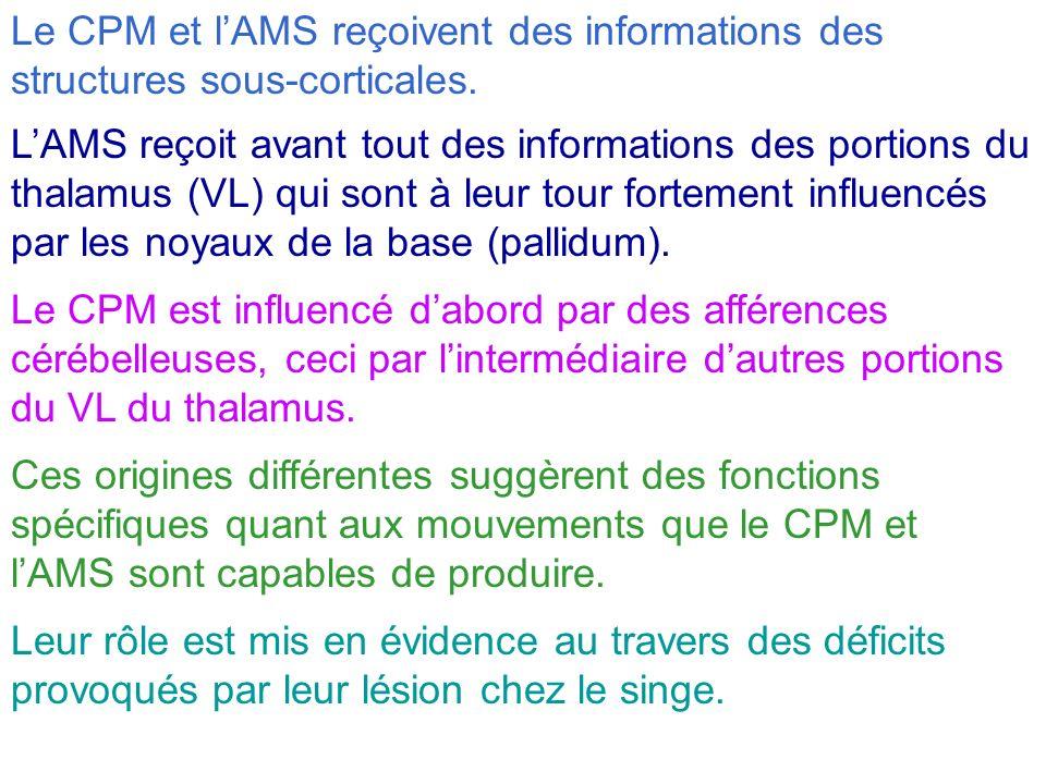 Le CPM et lAMS reçoivent des informations des structures sous-corticales. LAMS reçoit avant tout des informations des portions du thalamus (VL) qui so