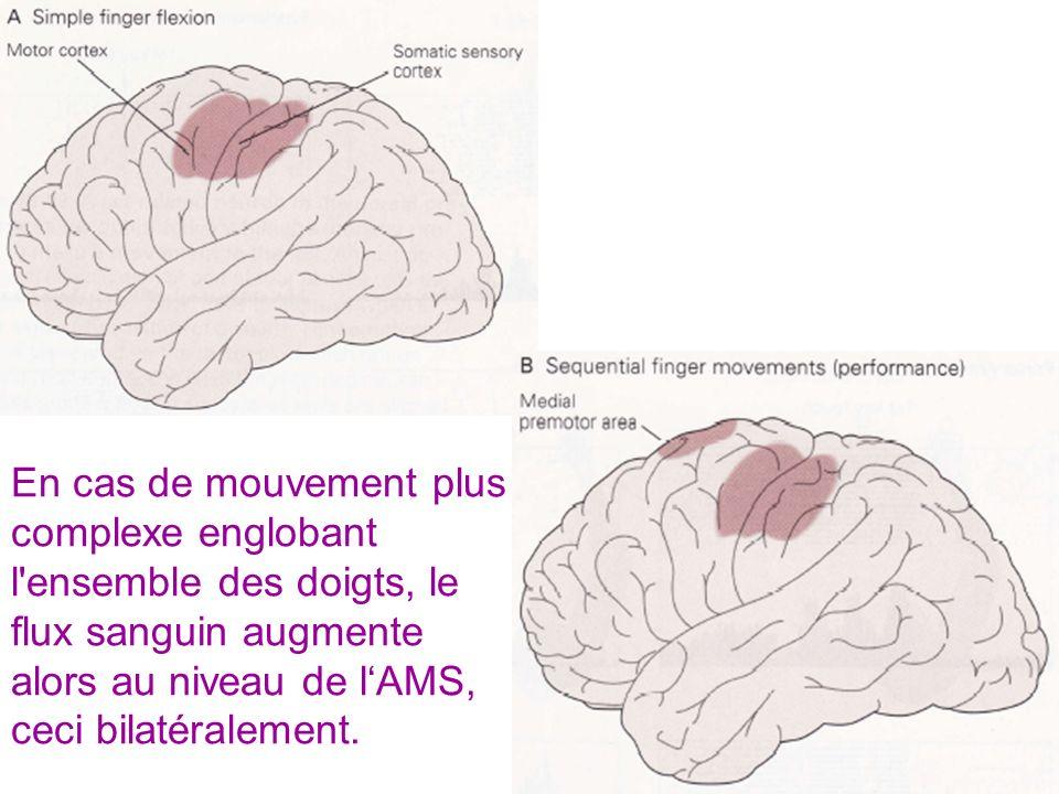 En cas de mouvement plus complexe englobant l'ensemble des doigts, le flux sanguin augmente alors au niveau de lAMS, ceci bilatéralement.