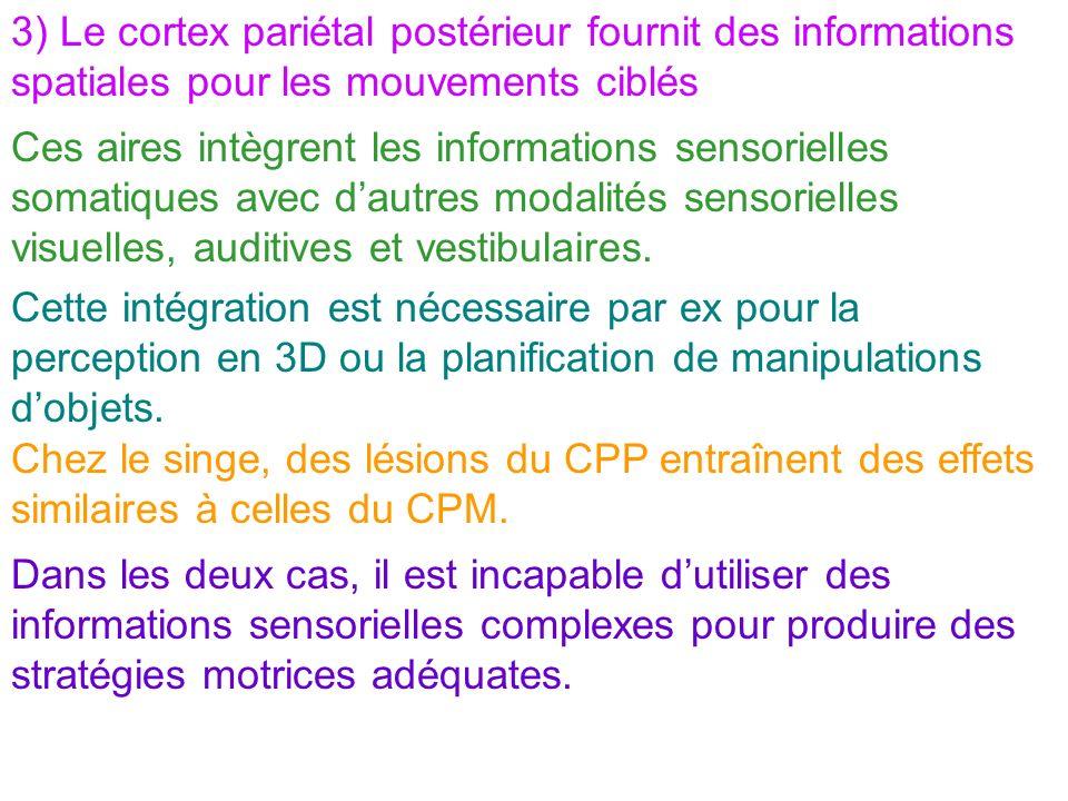 3) Le cortex pariétal postérieur fournit des informations spatiales pour les mouvements ciblés Ces aires intègrent les informations sensorielles somat
