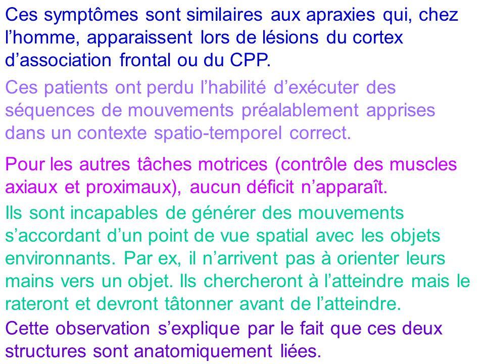 Ces symptômes sont similaires aux apraxies qui, chez lhomme, apparaissent lors de lésions du cortex dassociation frontal ou du CPP. Ces patients ont p