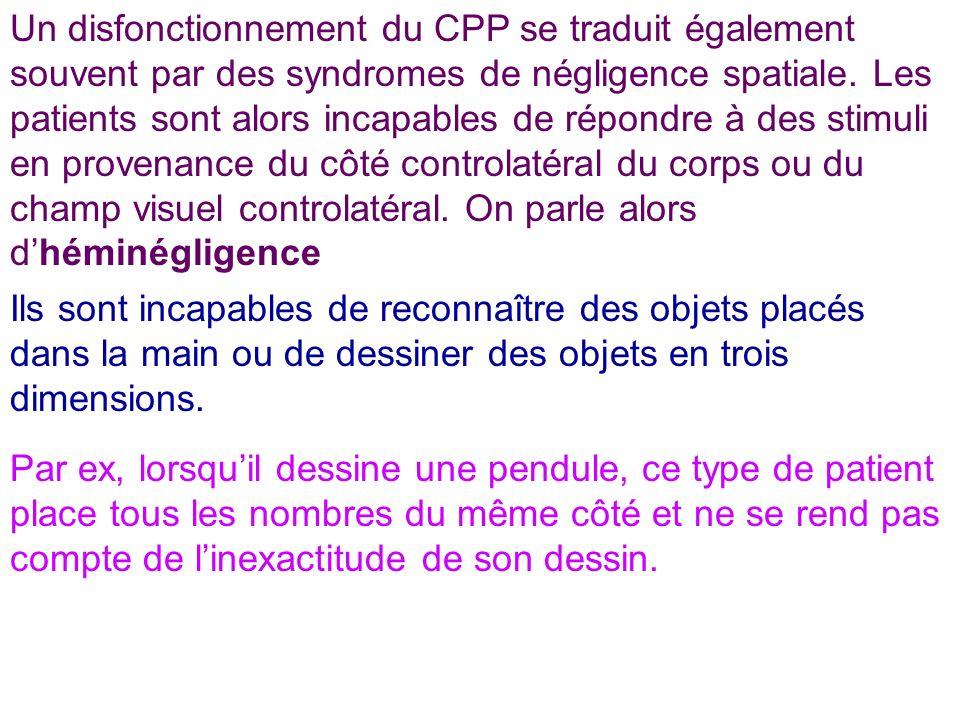 Un disfonctionnement du CPP se traduit également souvent par des syndromes de négligence spatiale. Les patients sont alors incapables de répondre à de