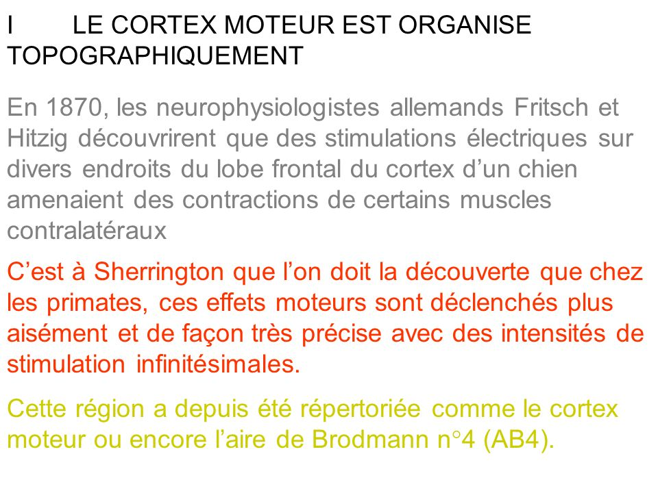 Ce phénomène de convergence a pu être mis en évidence par un enregistrement des fibres cortico- bulbaires contrôlant les muscles de la mâchoire.