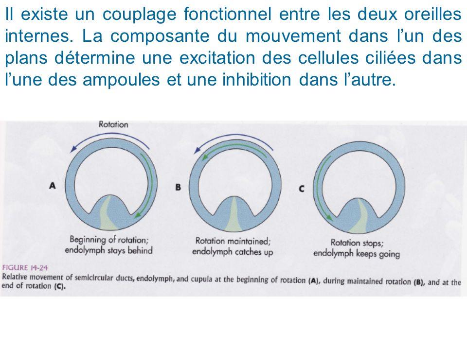 Il existe un couplage fonctionnel entre les deux oreilles internes. La composante du mouvement dans lun des plans détermine une excitation des cellule