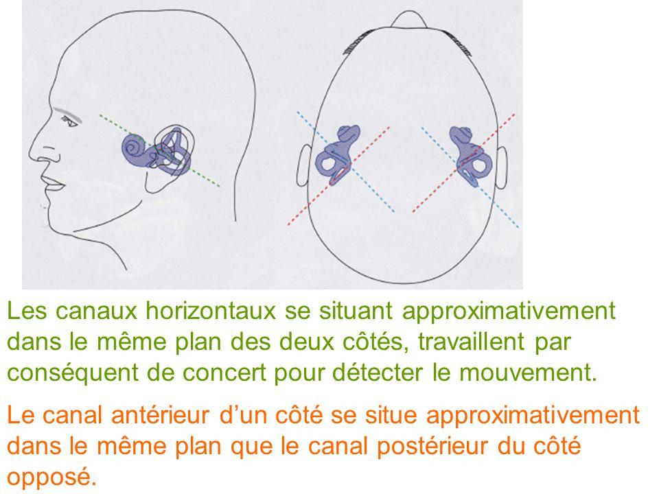 Les canaux horizontaux se situant approximativement dans le même plan des deux côtés, travaillent par conséquent de concert pour détecter le mouvement