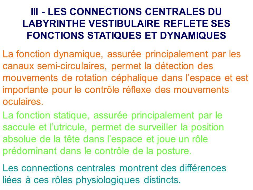 La fonction dynamique, assurée principalement par les canaux semi-circulaires, permet la détection des mouvements de rotation céphalique dans lespace