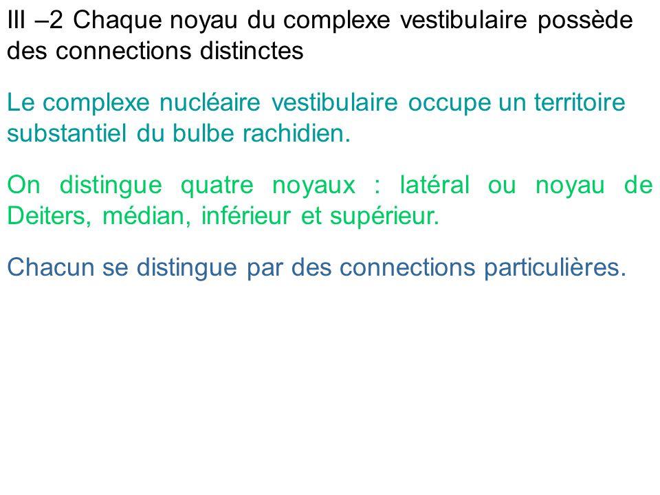 Le complexe nucléaire vestibulaire occupe un territoire substantiel du bulbe rachidien. On distingue quatre noyaux : latéral ou noyau de Deiters, médi
