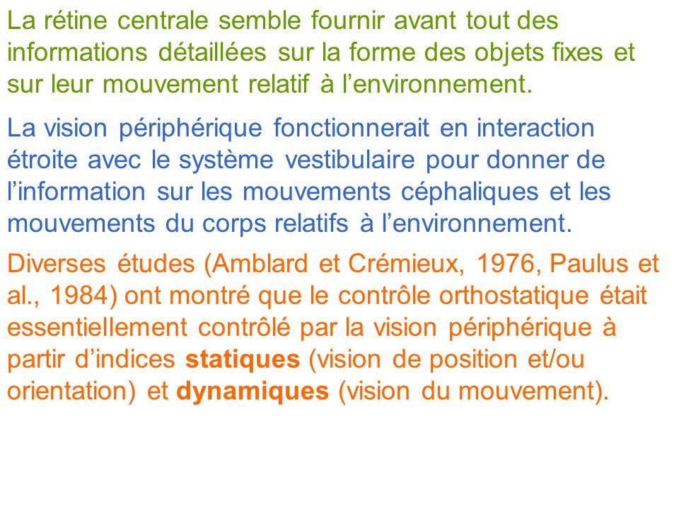 La rétine centrale semble fournir avant tout des informations détaillées sur la forme des objets fixes et sur leur mouvement relatif à lenvironnement.