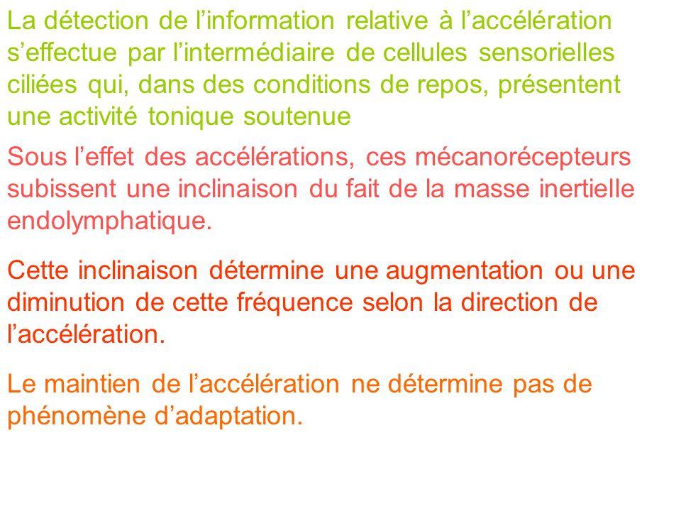 La détection de linformation relative à laccélération seffectue par lintermédiaire de cellules sensorielles ciliées qui, dans des conditions de repos,