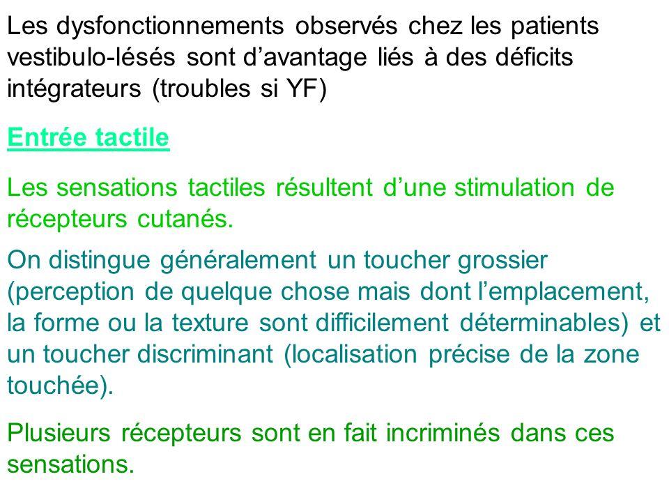 Les dysfonctionnements observés chez les patients vestibulo-lésés sont davantage liés à des déficits intégrateurs (troubles si YF) Entrée tactile Les