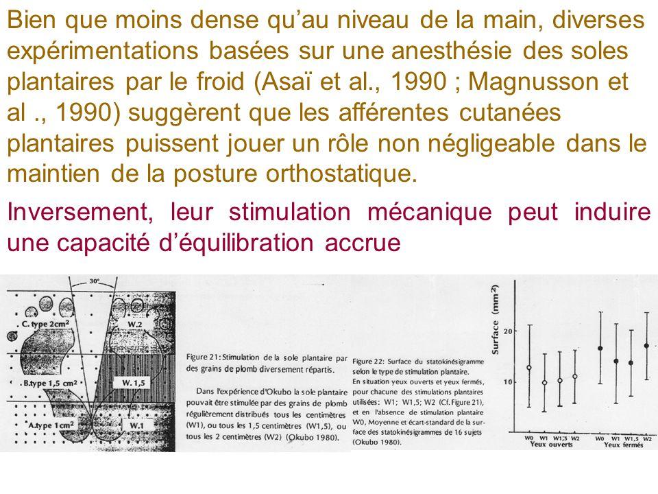Bien que moins dense quau niveau de la main, diverses expérimentations basées sur une anesthésie des soles plantaires par le froid (Asaï et al., 1990